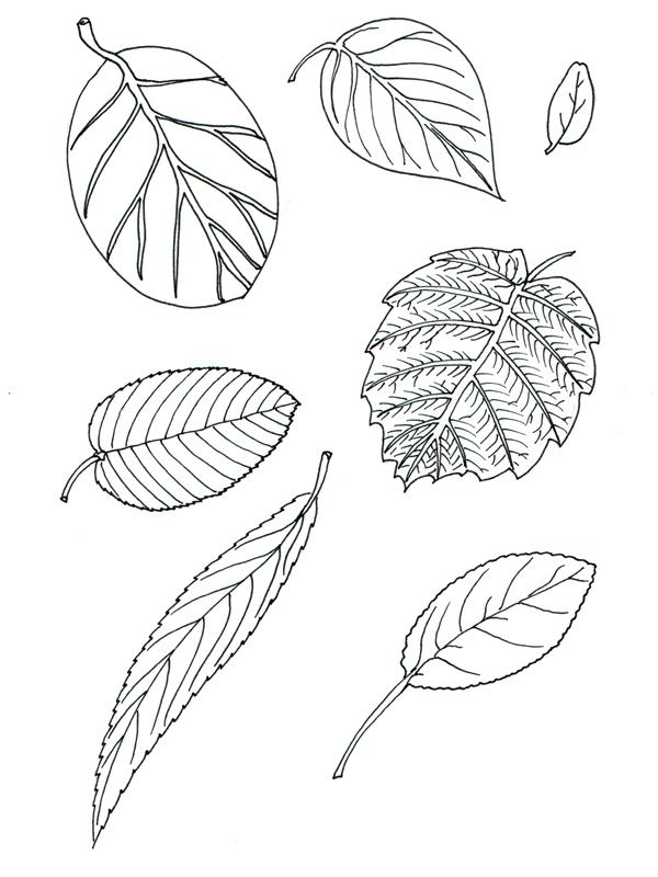 Laubbaumblätter aus dem Garten
