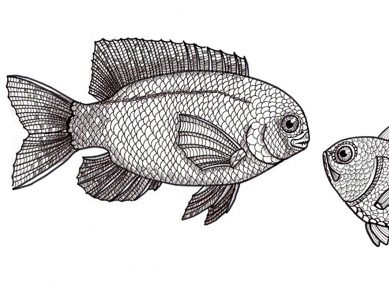 Fischgespräch