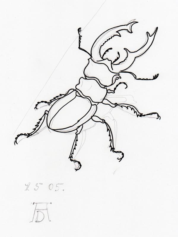 Hirschkäfer nach Dürer
